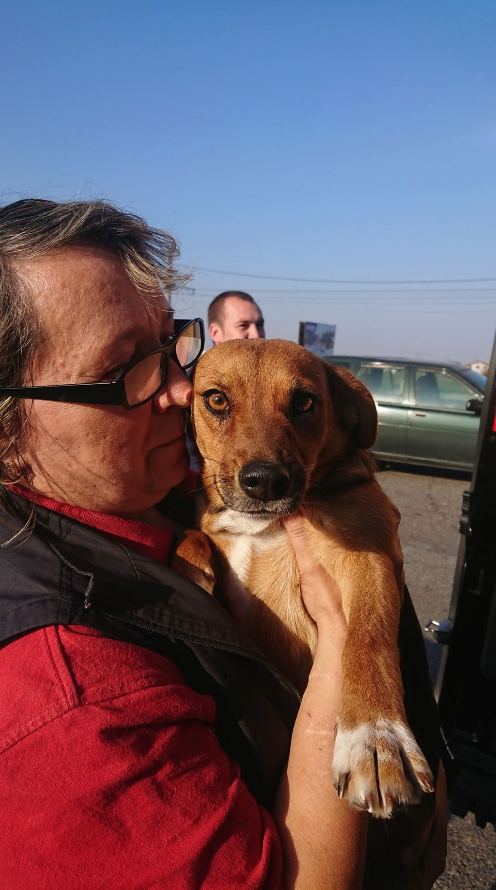 Freya - femelle - refuge de Arad - réservée adoption (39) 45696710