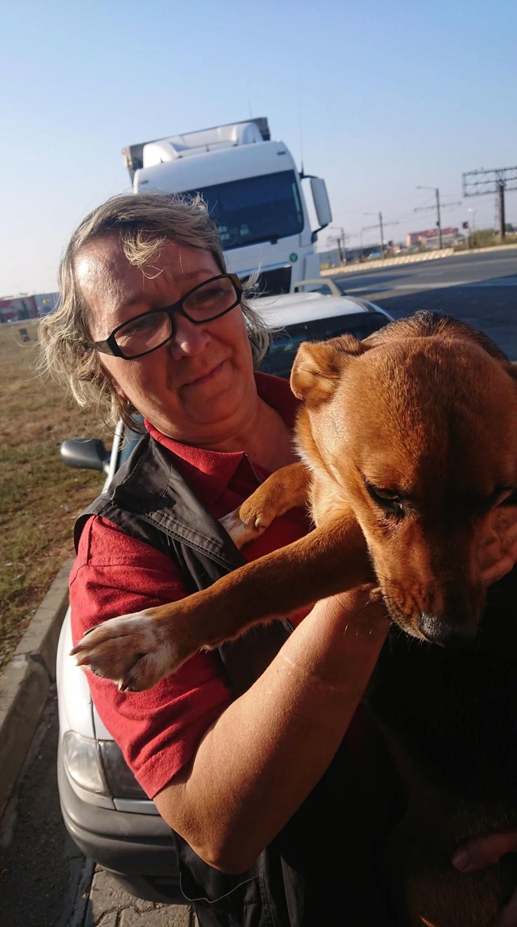Freya - femelle - refuge de Arad - réservée adoption (39) 45710510