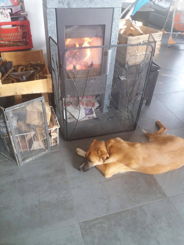 Athos - mâle - chez Andreea - Târgu Frumos - réservé adoption (68) 46093410
