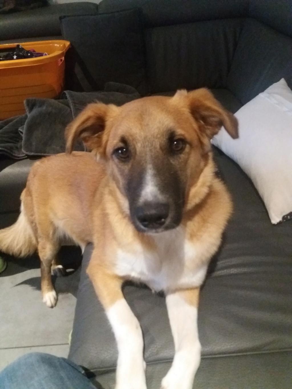 Athos - mâle - chez Andreea - Târgu Frumos - réservé adoption (68) 46104910