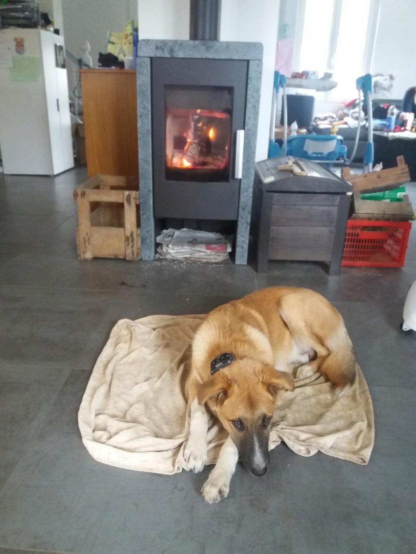 Athos - mâle - chez Andreea - Târgu Frumos - réservé adoption (68) 46260910