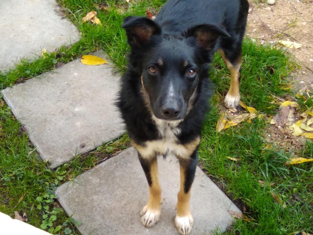 Nookie - femelle  - refuge de Târgu Frumos - Réservée adoption (67) 46314510