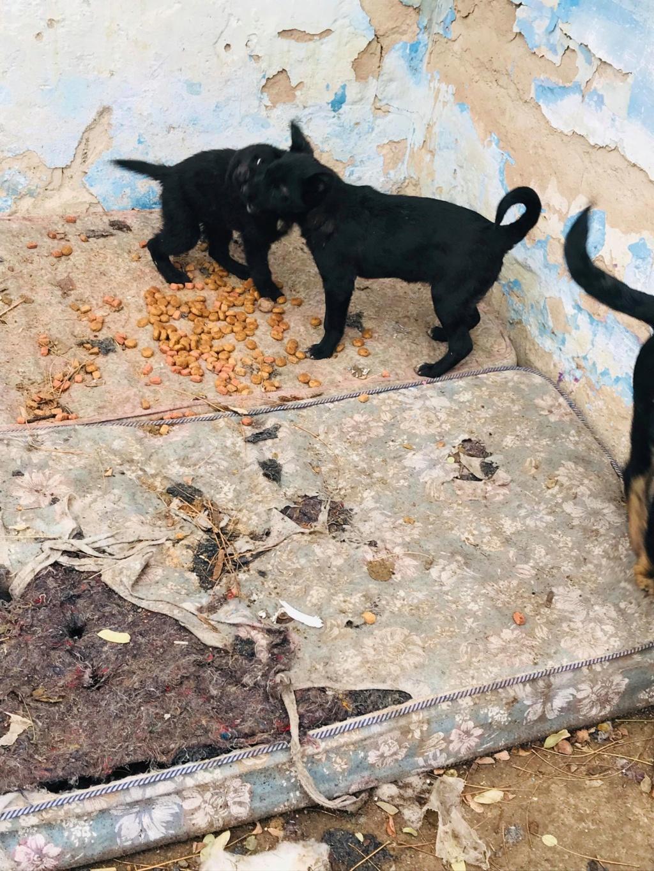 Pixis - mâle - chez Andreea à Târgu Frumos-reservé adoption 68 46383011