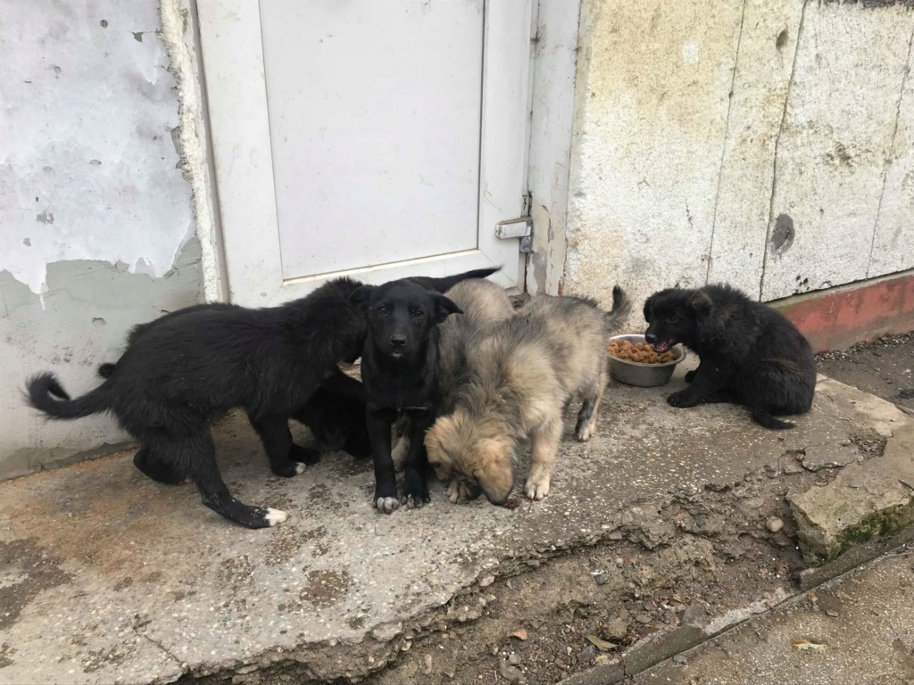Pixis - mâle - chez Andreea à Târgu Frumos-reservé adoption 68 46389710