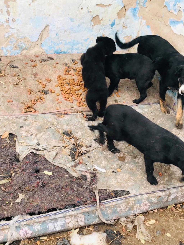 Pixis - mâle - chez Andreea à Târgu Frumos-reservé adoption 68 46408410