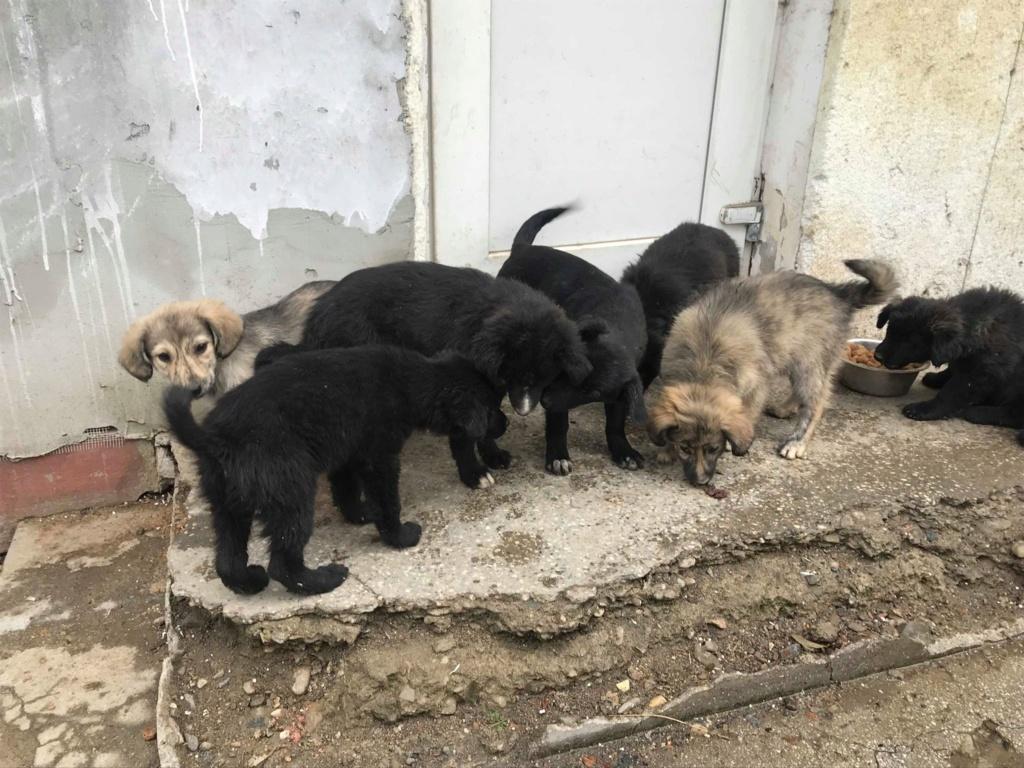 Pixis - mâle - chez Andreea à Târgu Frumos-reservé adoption 68 46469313