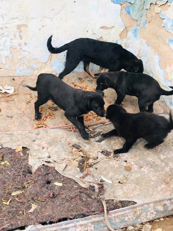 Pixis - mâle - chez Andreea à Târgu Frumos-reservé adoption 68 46479810