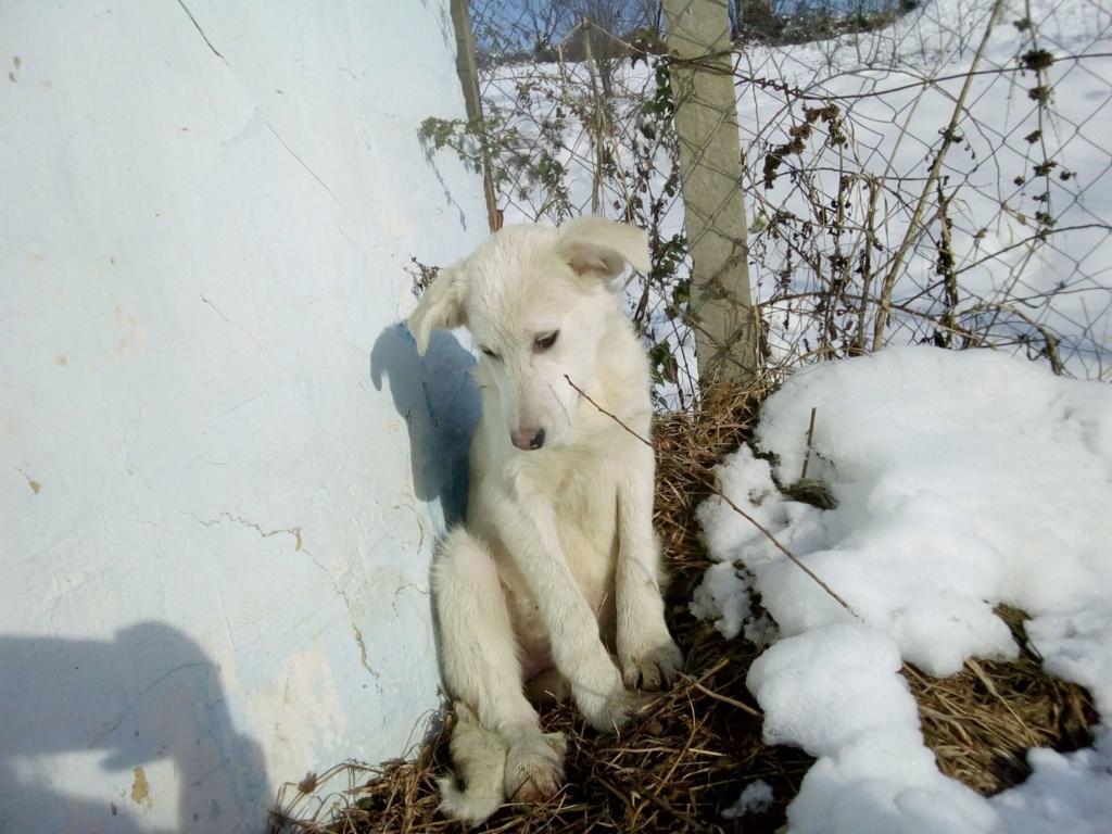 Alaska - femelle - Târgu Frumos - réservé adoption (68) 46518810
