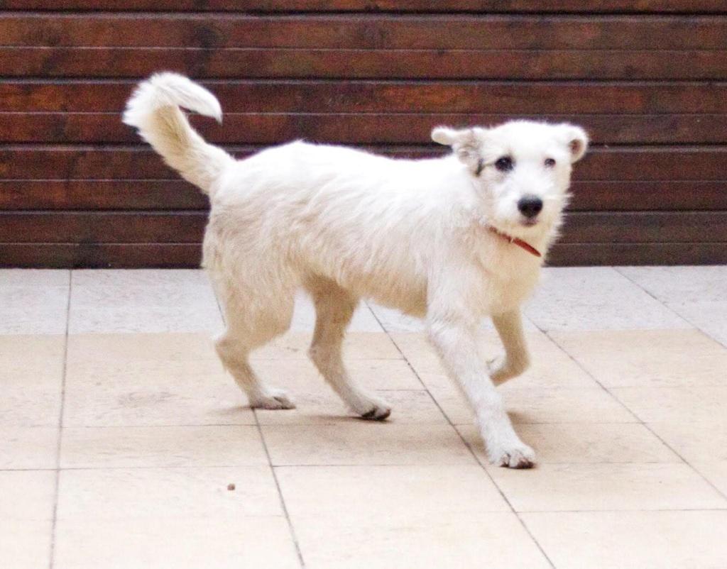 Jessie - femelle - refuge d'Arad - adoptée via Arad 46650510