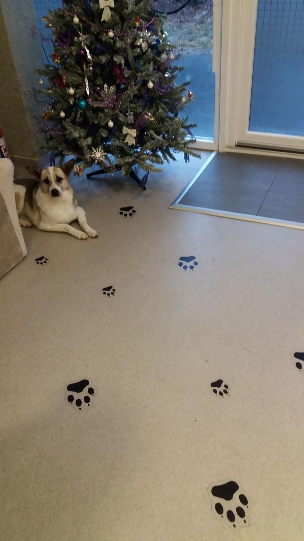 Fetita et Piciu - Arad - à adopter ensemble - réservés adoption ensemble (68) 46745310