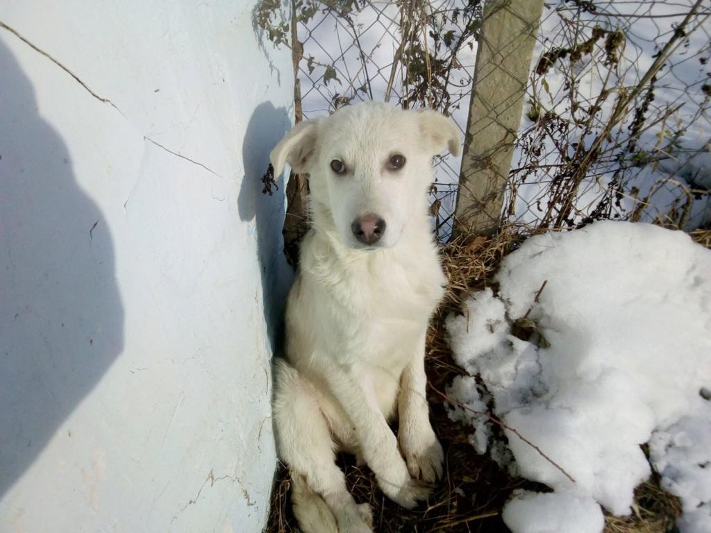 Alaska - femelle - Târgu Frumos - réservé adoption (68) 46756810