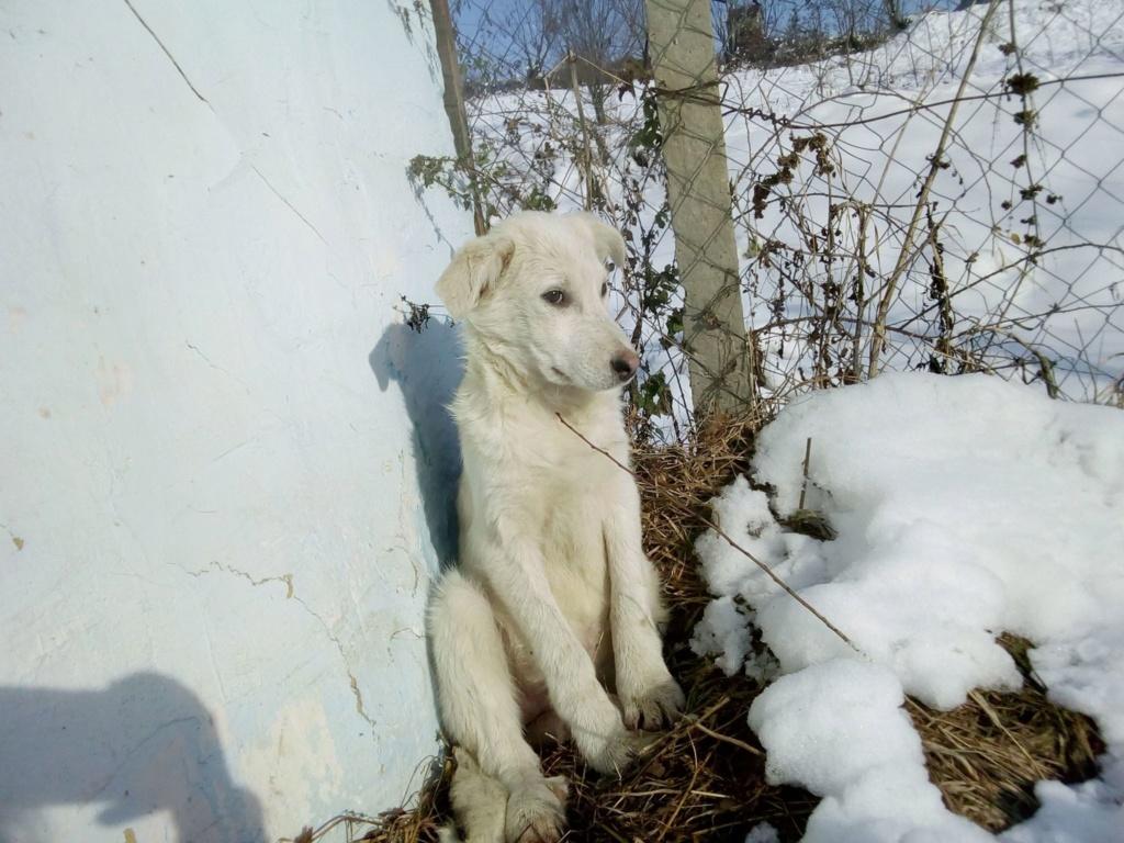 Alaska - femelle - Târgu Frumos - réservé adoption (68) 46763610