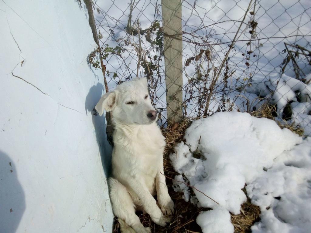 Alaska - femelle - Târgu Frumos - réservé adoption (68) 46800510