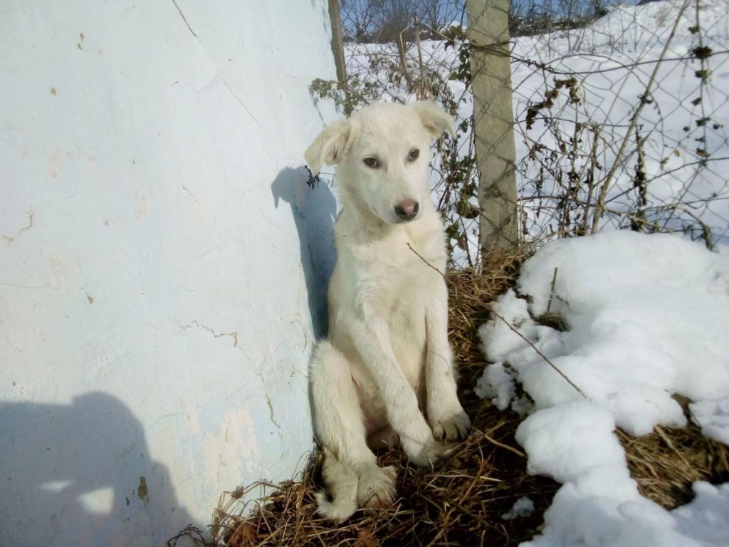 Alaska - femelle - Târgu Frumos - réservé adoption (68) 46831310