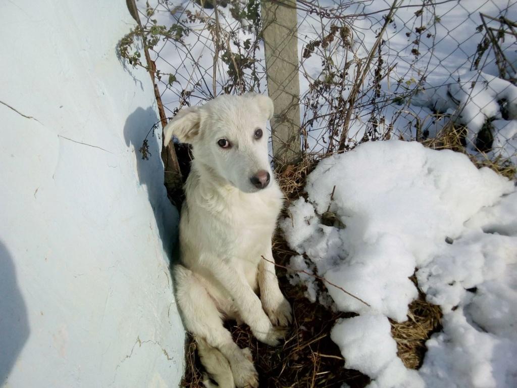 Alaska - femelle - Târgu Frumos - réservé adoption (68) 46948110