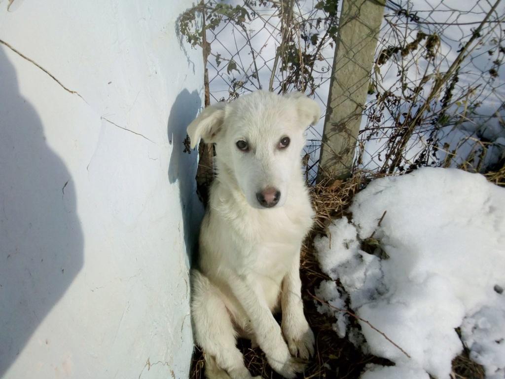Alaska - femelle - Târgu Frumos - réservé adoption (68) 47123910