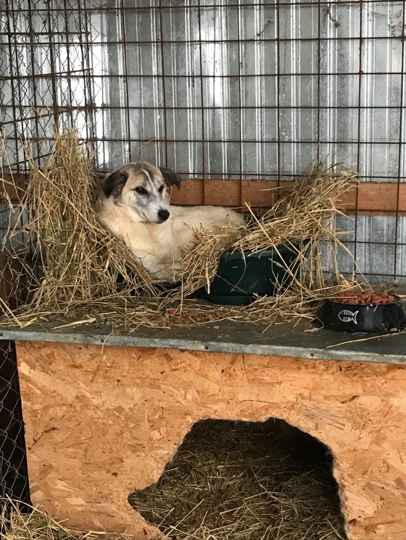 Anouchka - femelle - fourrière de Târgu Frumos 48371210