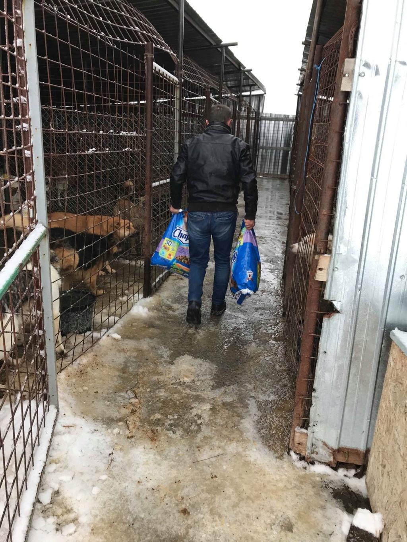 La fourrière communale de Târgu Frumos 48396910