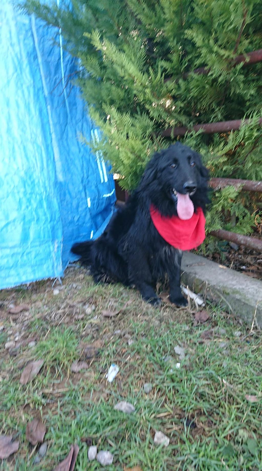 Browdy- mâle- refuge d'Arad - en famille d'accueil dans le 67 48923710