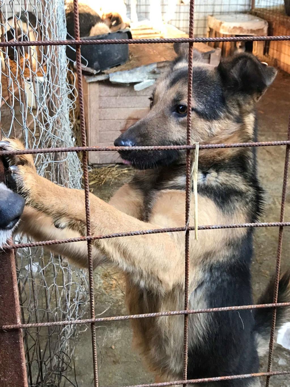 Minos - mâle à Targu Frumos - en famille d'accueil dans le 67 - réserve adoption (01) 49599610