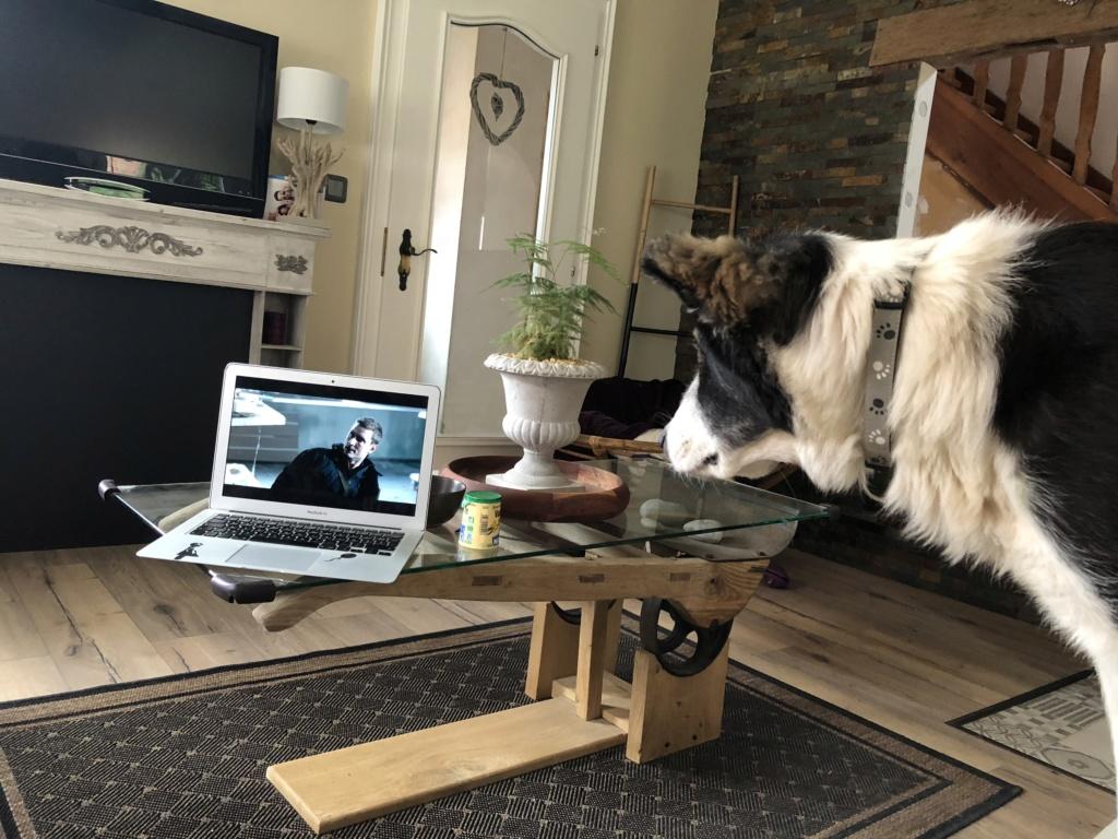Everest - chienne femelle - fourrière de Târgu Frumos - en famille d'accueil dans le 67 7769d710