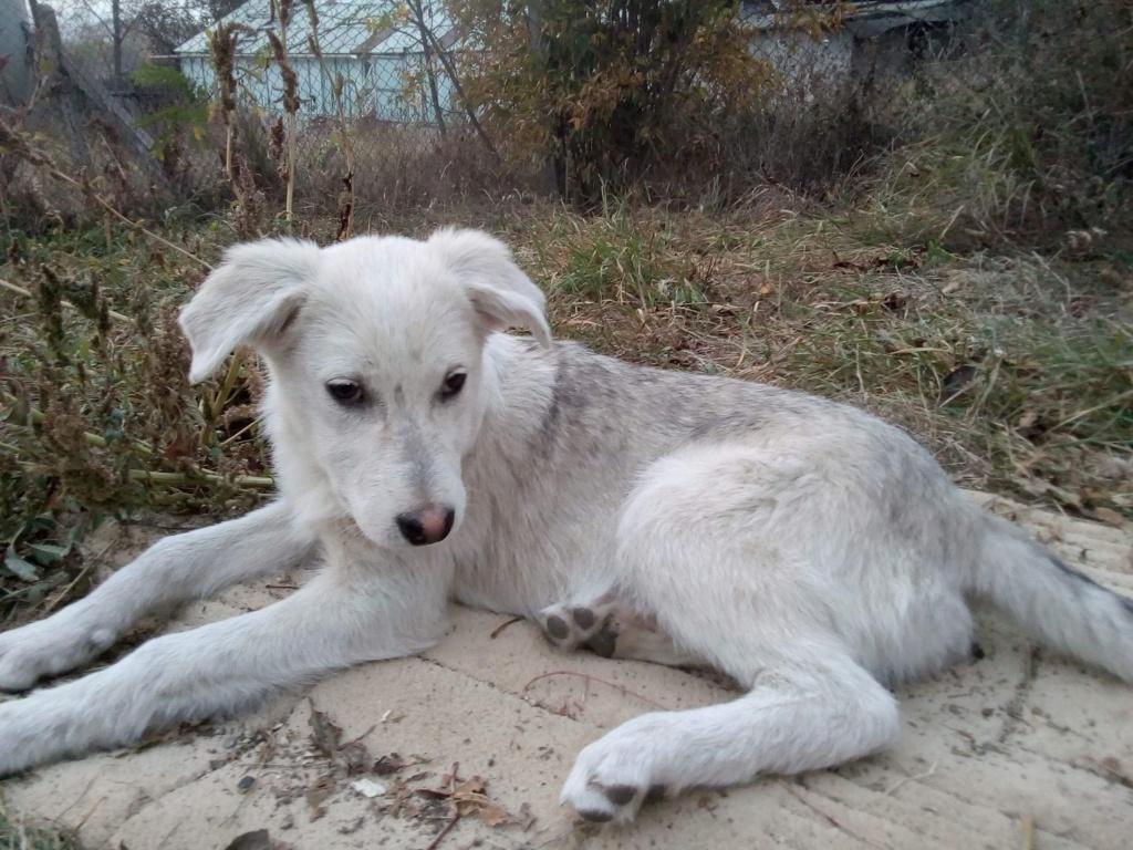 Alaska - femelle - Târgu Frumos - réservé adoption (68) 8113d010