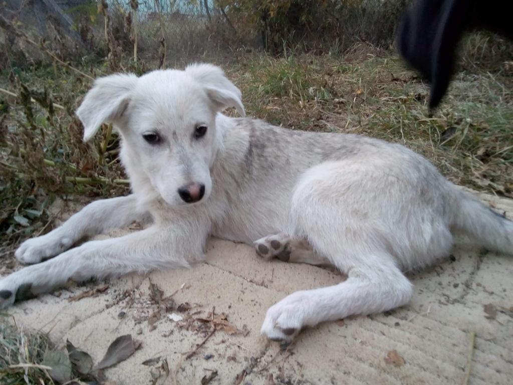Alaska - femelle - Târgu Frumos - réservé adoption (68) A1b80710
