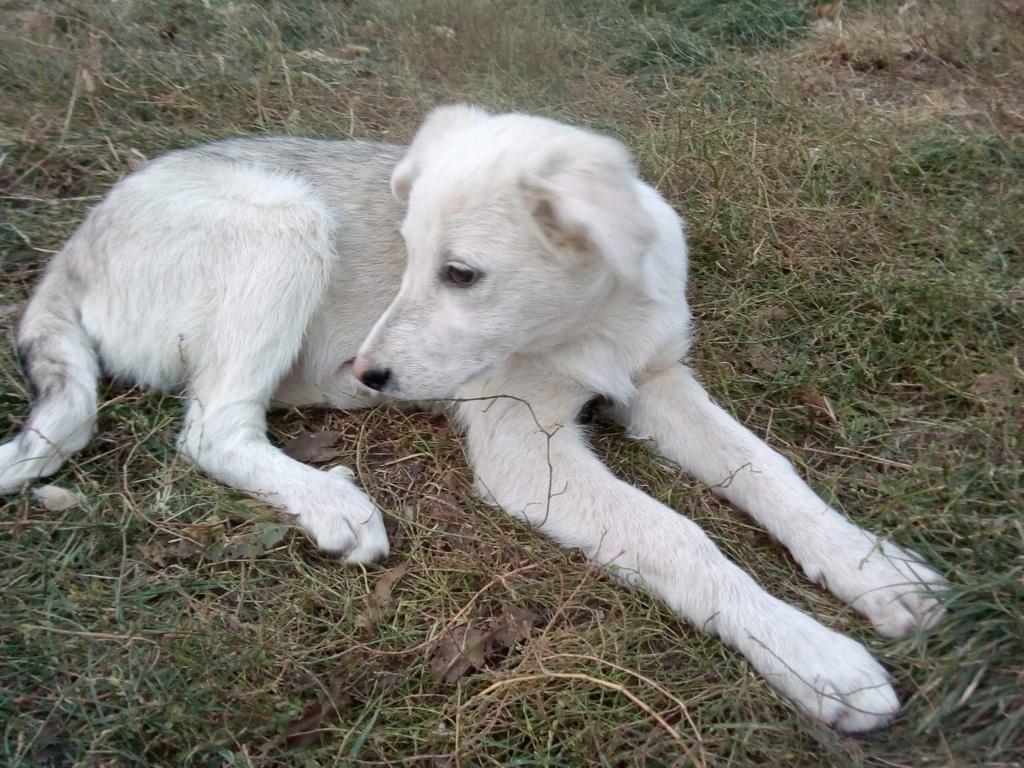 Alaska - femelle - Târgu Frumos - réservé adoption (68) Bbefa210