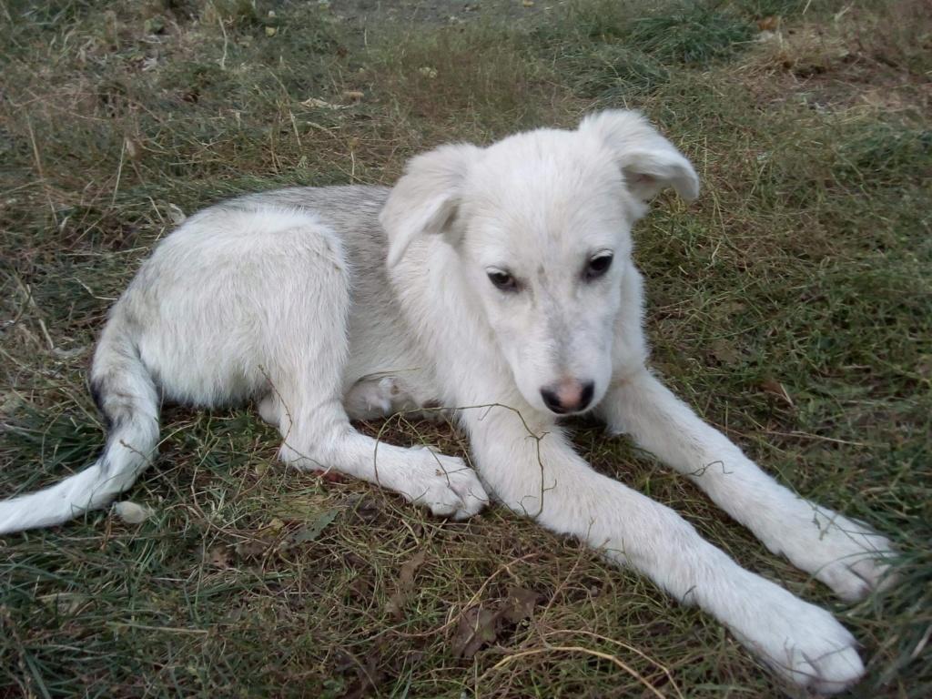 Alaska - femelle - Târgu Frumos - réservé adoption (68) De42f510