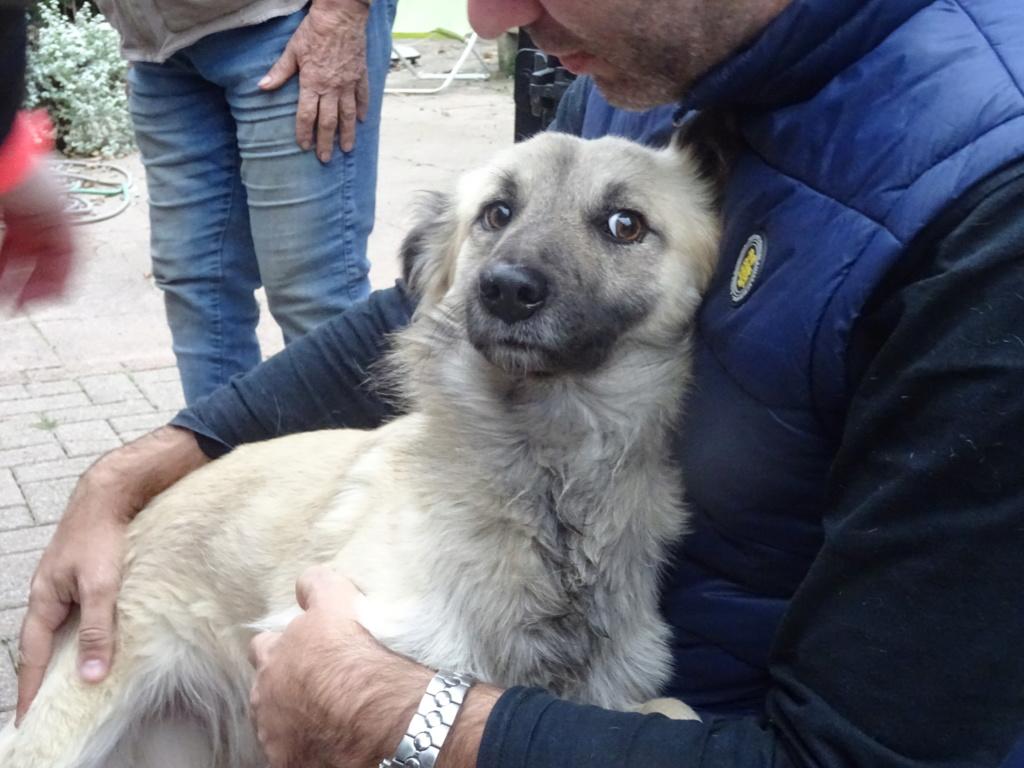 Numai (ex-Artic) - mâle - fourrière de Târgu Frumos Dsc00124