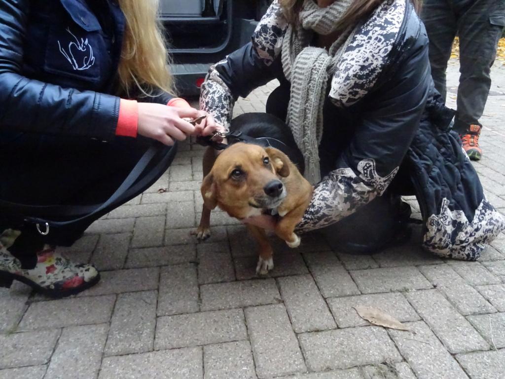 Freya - femelle - refuge de Arad - réservée adoption (39) Dsc00126