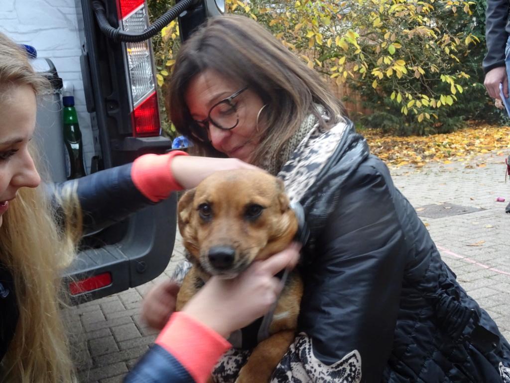 Freya - femelle - refuge de Arad - réservée adoption (39) Dsc00129