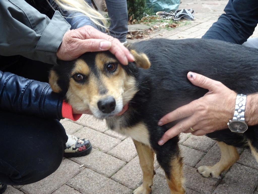 Nashka (ex-Nikita) - femelle - fourrière de Târgu Frumos - réservée adoption (80) Dsc00217