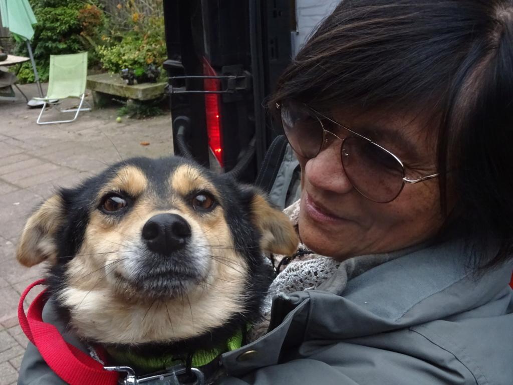 Nashka (ex-Nikita) - femelle - fourrière de Târgu Frumos - réservée adoption (80) Dsc00218