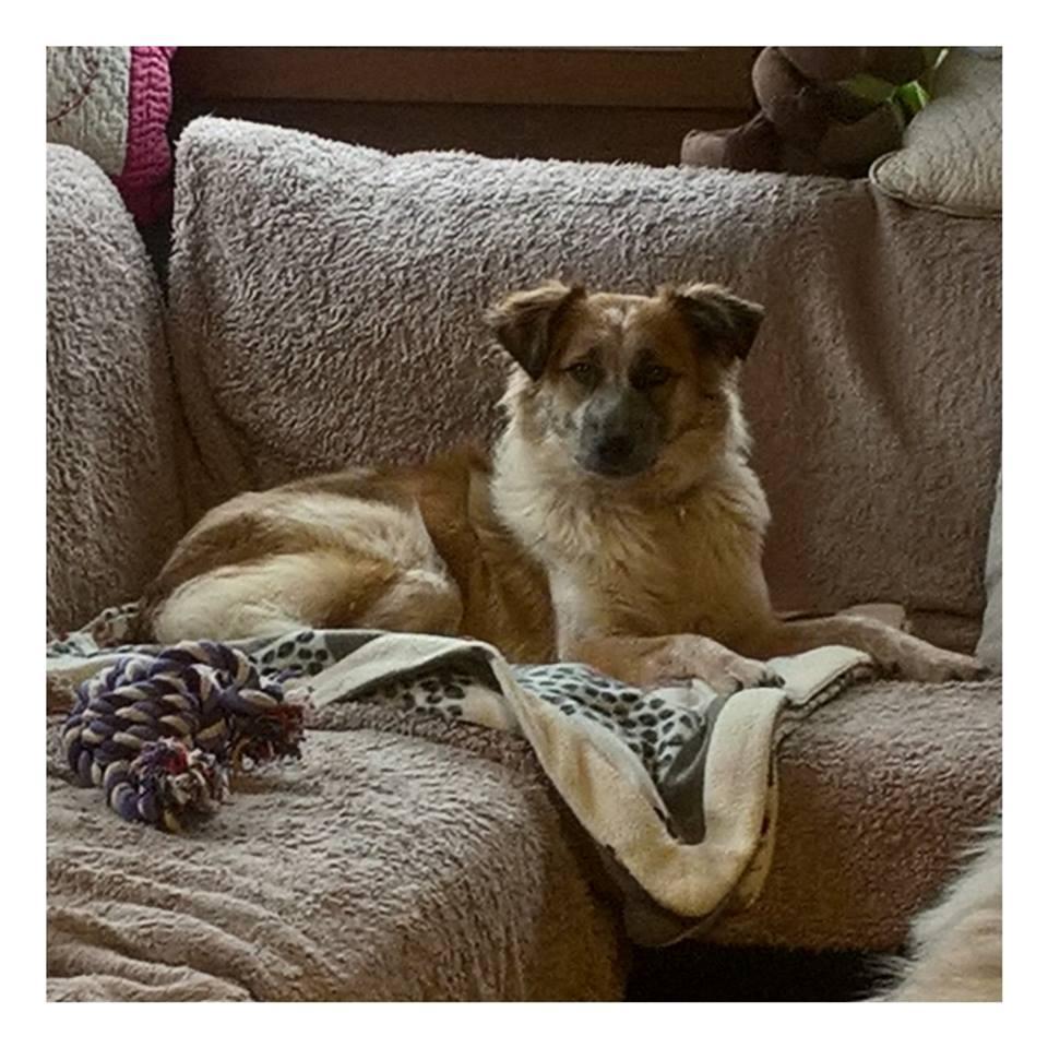 Láska (ex-Dana) - femelle - refuge de Târgu Frumos - réservée adoption (88) Laika10