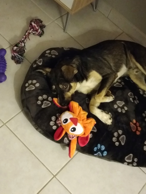 Gimli (ex-Jonny) - mâle - refuge de Târgu Frumos - réservé adoption (68) P_201811