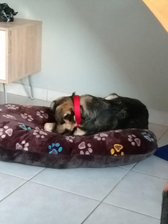 Gimli (ex-Jonny) - mâle - refuge de Târgu Frumos - réservé adoption (68) P_201812