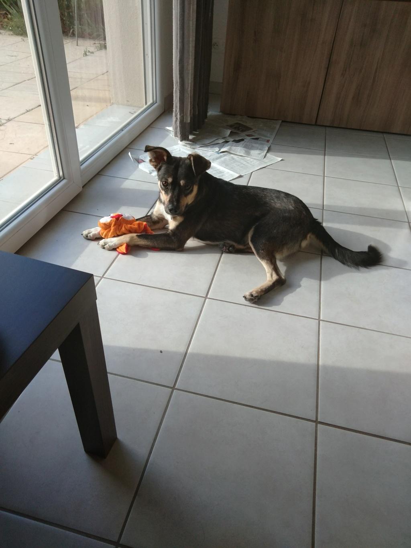 Gimli (ex-Jonny) - mâle - refuge de Târgu Frumos - réservé adoption (68) P_201813