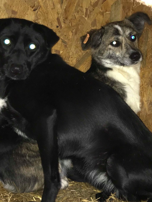 Nutela - chienne femelle - refuge de Târgu Frumos - en famille d'accueil dans le 68 Popcor10
