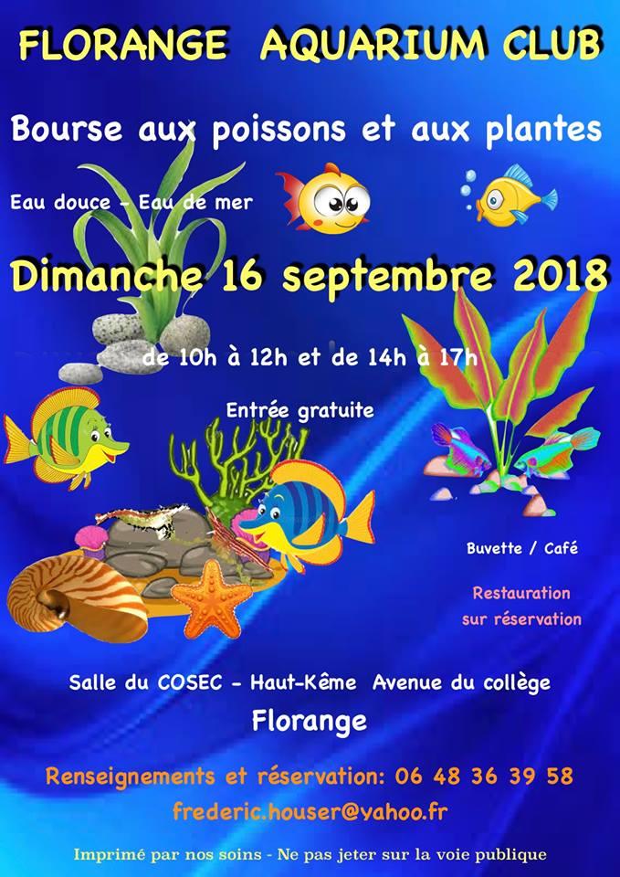 Bourse Florange (57) - 16 septembre 2018 33765810