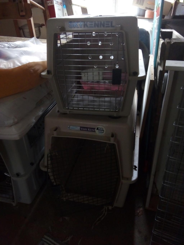Mettre un chat dans une caisse de transport Img_2212