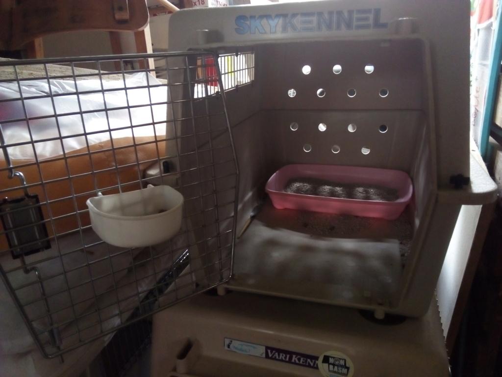 Mettre un chat dans une caisse de transport Img_2213