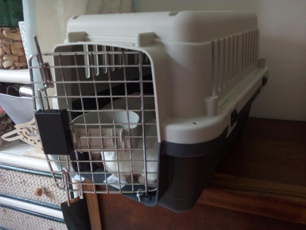Mettre un chat dans une caisse de transport - Page 2 Img_2216