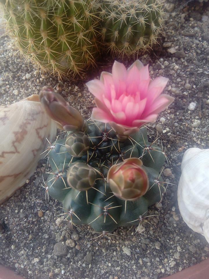 floraison du printemps 31945110