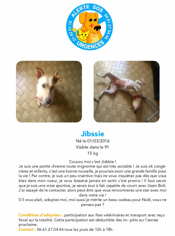 JIBBSIE, femelle, né 03/2016 Captur13