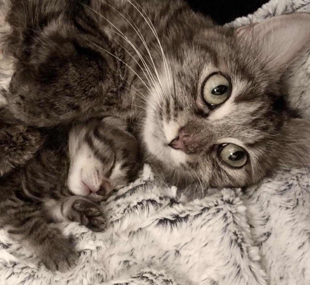 NIKIE et ses 3 chatons, femelle, ? Image014