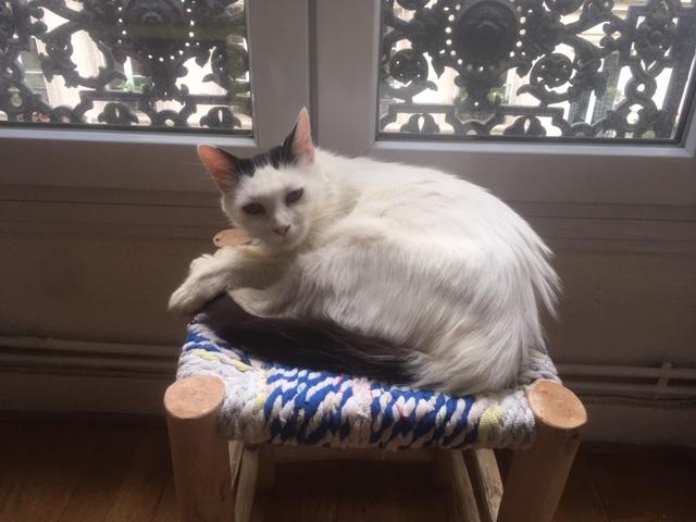 OPALE, femelle, née 01/2017 Image104