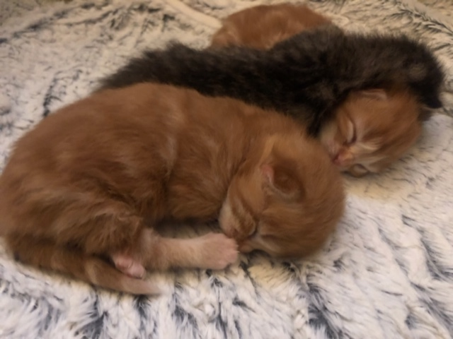 NIKIE et ses 3 chatons, femelle, ? Image209