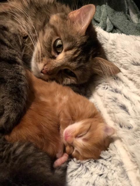 NIKIE et ses 3 chatons, femelle, ? Image228