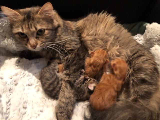 NIKIE et ses 3 chatons, femelle, ? Image416